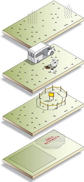 fases da descontaminação do solo